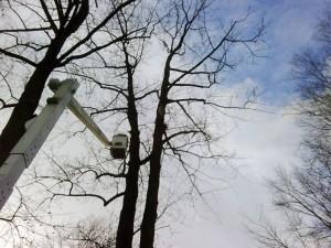 tree service, pruning, cutting