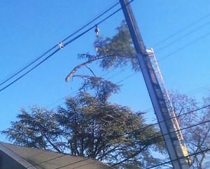 NY / NJ tree removal company