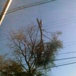 Orange County NY tree removal service
